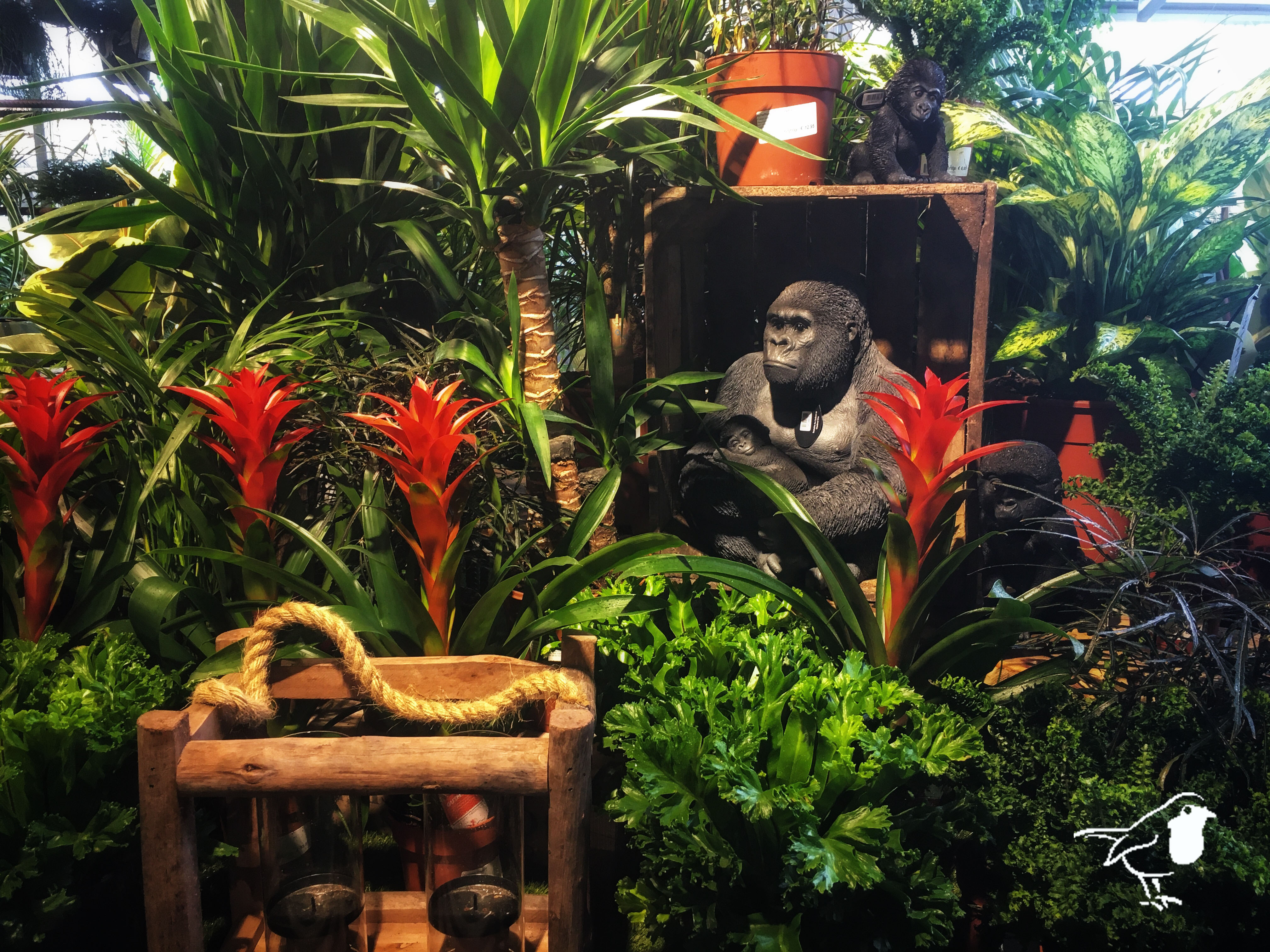An Indoor Jungle for a Healthy Home